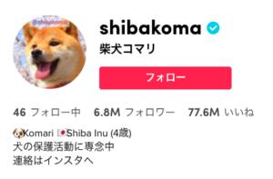 日本人No8 TikToker「柴犬コマリ」